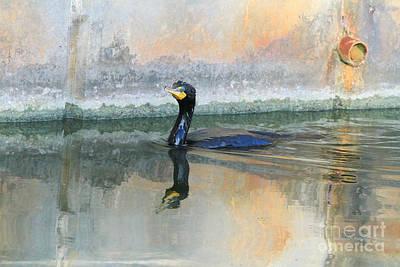 Cormorant Swim Print by Deborah Benoit