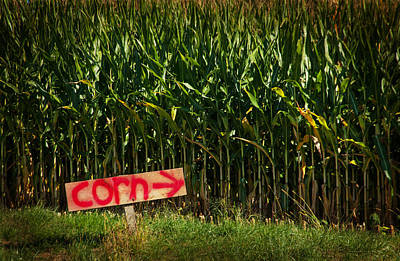 Kent Connecticut Photograph - Corn by Karol Livote
