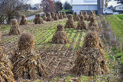 Amish Photograph - Corn Shocks Amish Field by David Arment