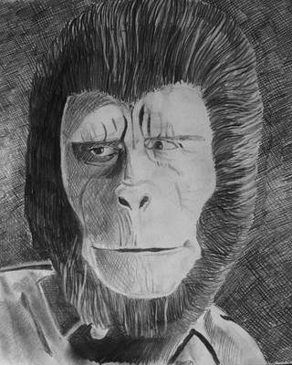 Chimpanzee Drawing - Cornelius by Jeremy Moore