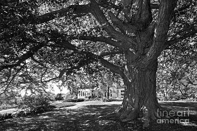 Photograph - Cornell College Landscape by University Icons