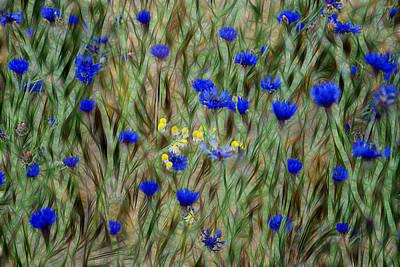 Fractal Photograph - Cornflowers by Joachim G Pinkawa
