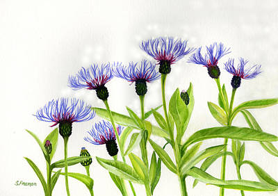Cornflowers Print by Sharon Freeman