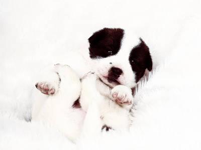 Dog Photograph - Cosiness by VRL Art