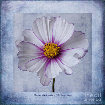 Cosmos With Textures Print by John Edwards