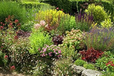 Salvia Photograph - Cottage Garden by David Aubrey