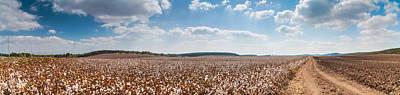 Cotton Field Original by Guy Zidel