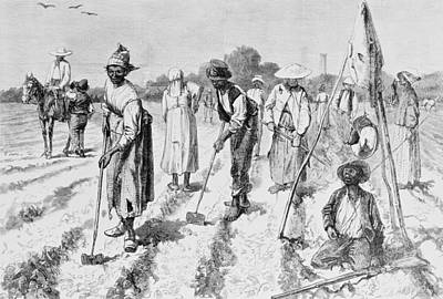 Us Civil Rights Drawing - Cotton Plantation by Edwin Austin Abbey