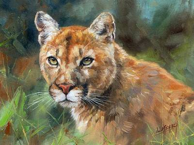Mountain Lion Painting - Cougar by David Stribbling