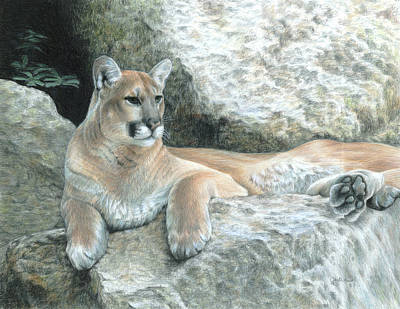 Colored Pencil Painting - Cougar Haven by Carla Kurt