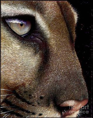 Mountain Lion Painting - Cougar by Jurek Zamoyski