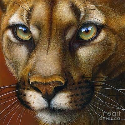 Mountain Lion Painting - Cougar October 2011 by Jurek Zamoyski