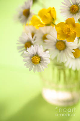 White Daisy Photograph - Country Posy by Jan Bickerton