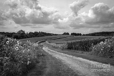 Country Road Print by Chris Scroggins