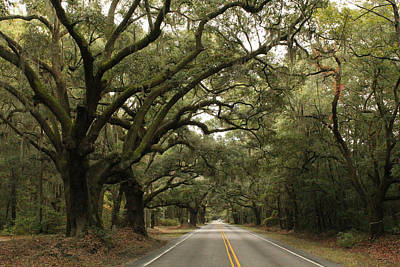 Granddaddy Photograph - Country Roads by Kathleen Golden