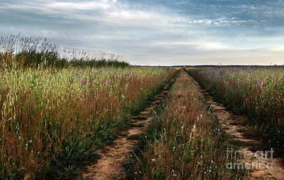 Evening Scenes Photograph - Countryside Tracks by Carlos Caetano