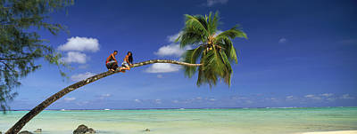 Young Man Photograph - Couple On Trunk Of A Palm Tree by Panoramic Images