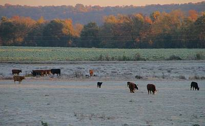 Cows At Sunrise Print by Dan Sproul