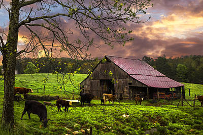 Cows At The Barn Print by Debra and Dave Vanderlaan