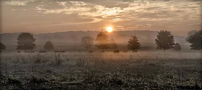 Md Digital Art - Cows In Field At Sunrise by Bill Cannon
