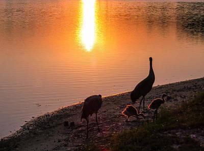 Juvenile Wall Decor Photograph - Cranes At Sunset by Zina Stromberg