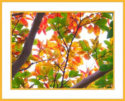 Green Leaves Photograph - Crapemyrtle Fall Color V3 by Scott Cameron