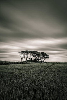 East Coast Photograph - Crawton Copse by Dave Bowman