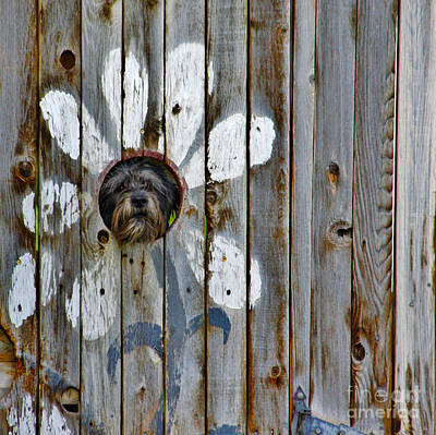 Creative Dog Fence Print by Janice Rae Pariza