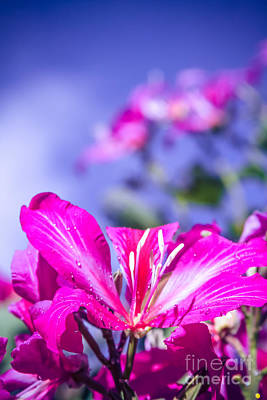 Pinks And Purple Petals Photograph - Creativity by Sharon Mau