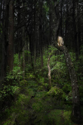 Swamp Photograph - Creature Of The Night by Bill Wakeley