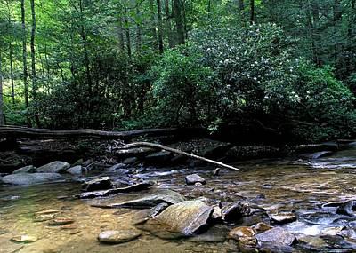 Creek At Pisgah Forest Print by Chrystyne Novack