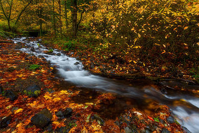Creekside Colors Print by Darren  White