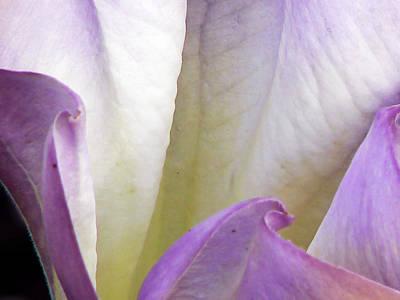 Creeping Jenny Flower Print by Pamela Patch