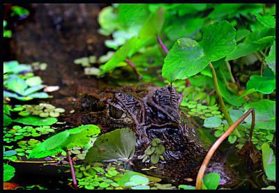 Photograph - Crocodilian Hunter by Gary Keesler