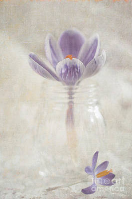 Flypaper Textures Photograph - Crocus by Marion Galt
