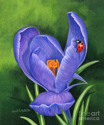 Color Pencil Drawing - Crocus And Ladybug by Sarah Batalka