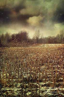 Crop Field In Early Winter After First Snow Print by Sandra Cunningham