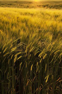 Crops Print by Svetlana Sewell