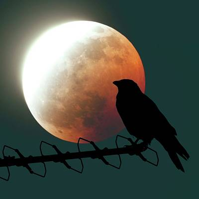 Astrophysical Photograph - Crow And Lunar Eclipse by Detlev Van Ravenswaay