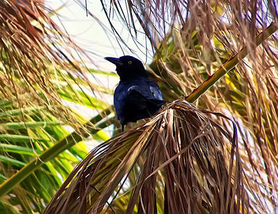 Crow In A Palm Tree Print by Chris Flees
