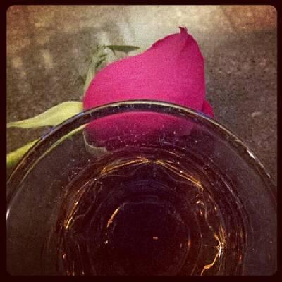 Roses Photograph - #crownroyal #rose #tgif by Mandy Shupp