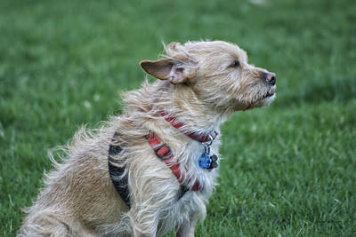 By Thomas Woolworth Photograph - Cruz Enjoying A Warm Gentle Breeze by Thomas Woolworth