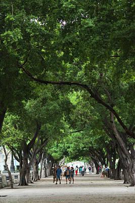 Prado Photograph - Cuba, Havana, Havana Vieja, Paseo De by Walter Bibikow
