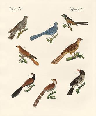 Cuckoos From Various Countries Print by Splendid Art Prints