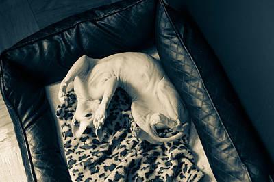 Cuddle Session Print by Zina Zinchik