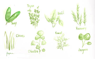 Culinary Drawing - Culinary Herbs Leafy Greens by Patricia Awapara