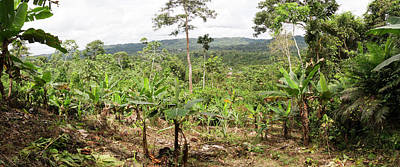 Slash Photograph - Cultivated Clearing In Amazon by Dr Morley Read