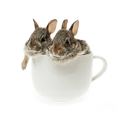 Cup Of Bunnies Print by Elena Elisseeva