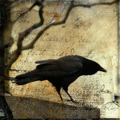 Curious Crow Print by Gothicolors Donna Snyder