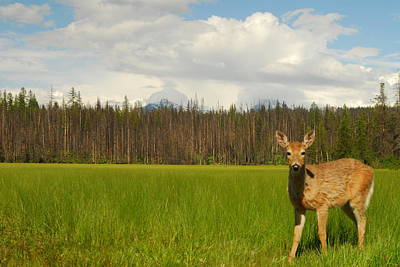 Curious Deer In Glacier National Park Print by Larry Moloney
